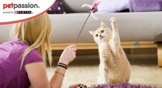Educare gatto cucciolo