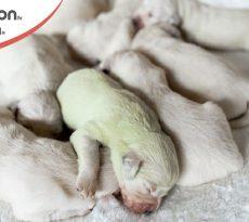 Cane cucciolo verde