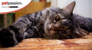 Benefici gatto in casa