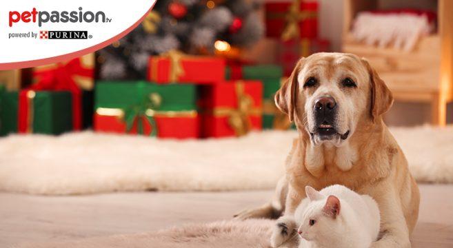 Natale con cane e gatto