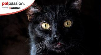 Gatti vedono al buio