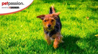 Forasacco cane