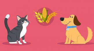 Cereali alimentazione cane e gatto