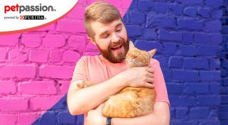 Proverbi famosi gatti