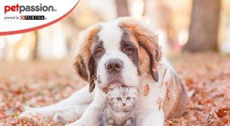 Adozione gatti e cani