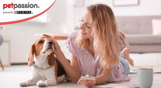 Perchè i cani leccano?