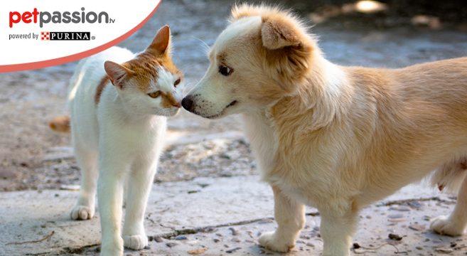 Cani e gatti randagi