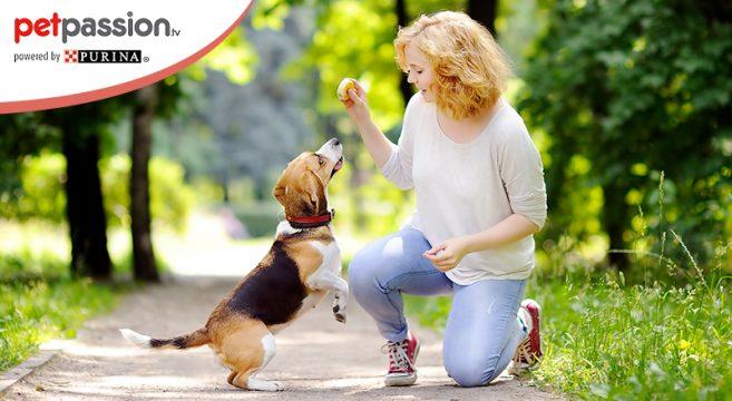 Come non far saltare il cane addosso