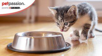 Cibo per gatti cuccioli
