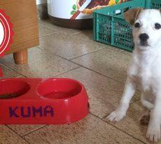 Storia di Kuma