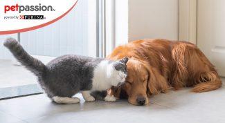 Cani e gatti si strusciano