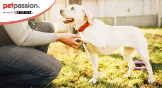 Linguaggio dei cani