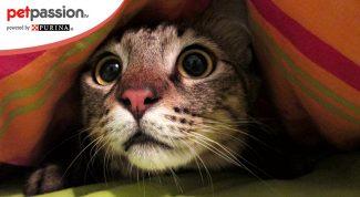 Gatto spaventato dai botti