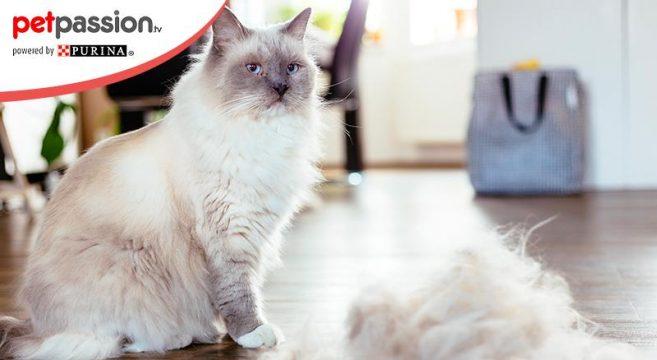 boli pelo gatto: cause e rimedi