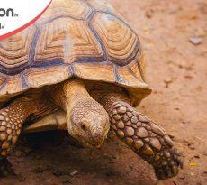 funzione scudo tartaruga