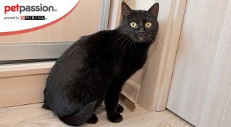gatto nero stressato