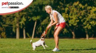 attività con i cani