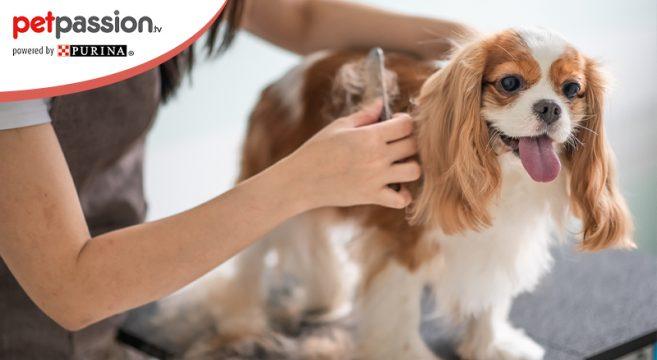 spazzolare cane