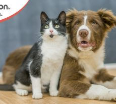 nome cane e gatto