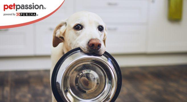 Ciotola rialzata per cani