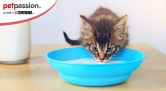Latte artificiale gattino