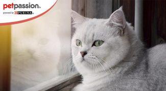 Esercizi gatti obesi