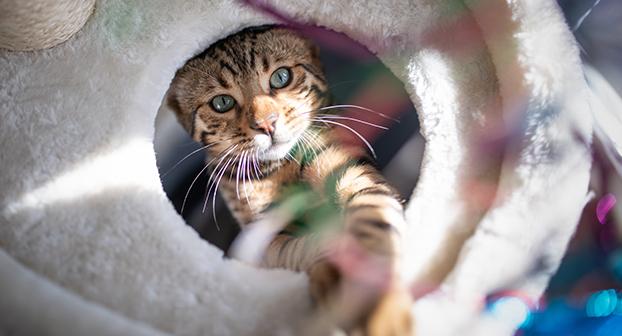 Cosa deve esserci in casa per il primo gatto