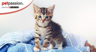 Accogliere il primo gatto in casa