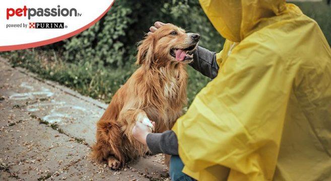 cane sotto la pioggia