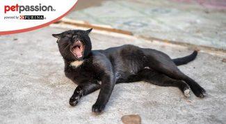 gatto starnutisce quali sono le cause
