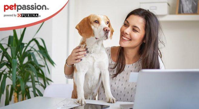 lavorare con i cani