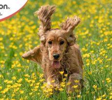 come gestire un cane in estate