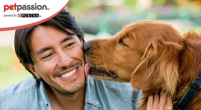 perché il cane lecca il proprietario