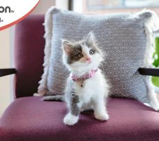 gatti più piccoli del mondo