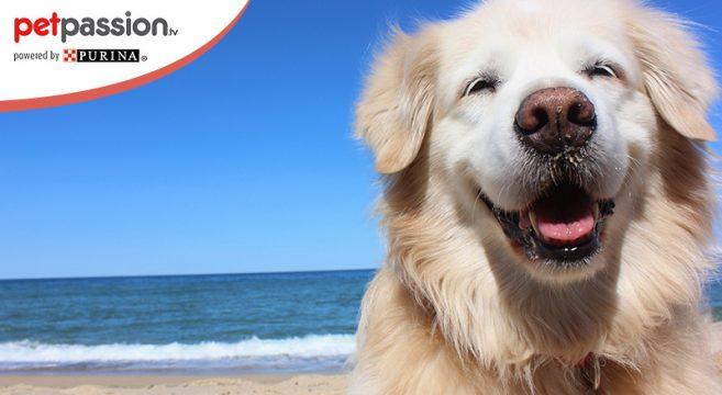 Cane in spiaggia coronavirus