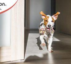 cambio casa cane