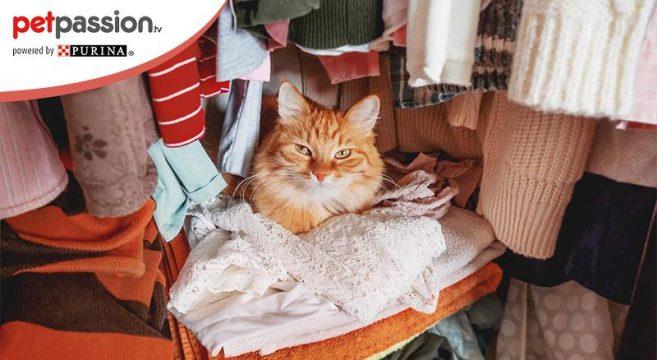 perché i gatti dormono sui vestiti
