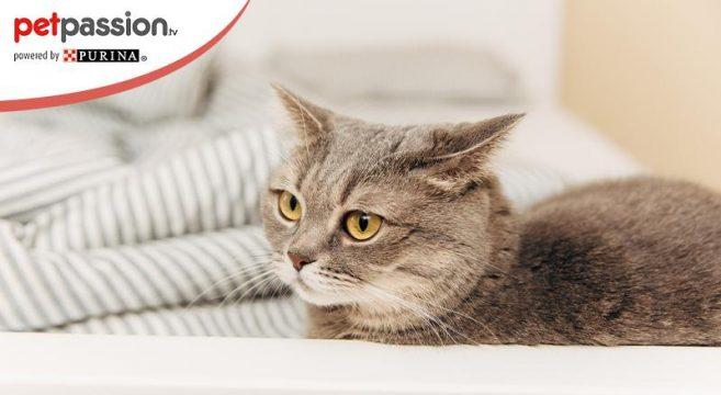 perché il gatto ha orecchie basse