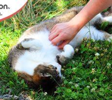 Il gatto saluta