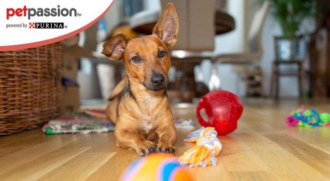 Giochi per cani: tappeto olfattivo