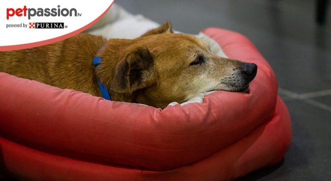 artrosi cane come curarla