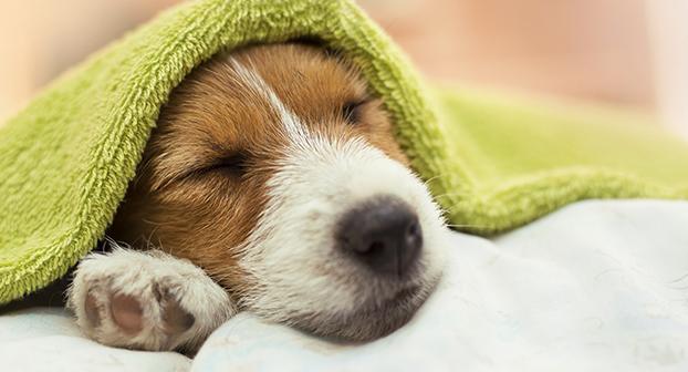 colpo di calore cane sintomi