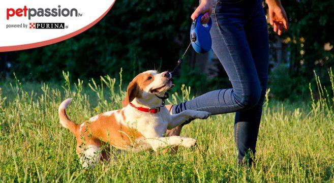 Routine ideale per il cane