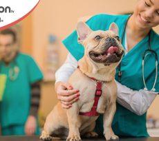 I servizi delle cliniche veterinarie