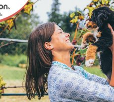 Adozione temporanea del cane