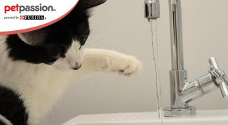 Gatto gioca con l'acqua