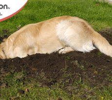 Cane scava in giardino