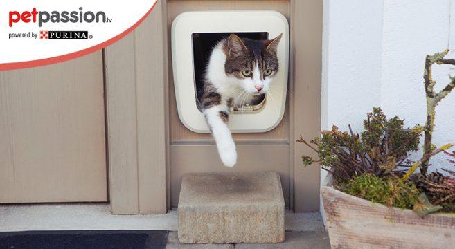 Gatti spariscono da casa