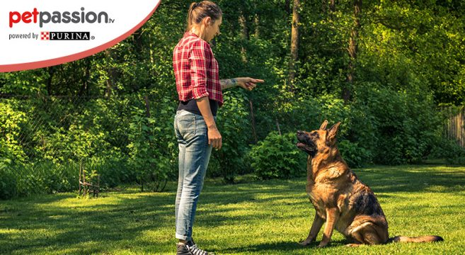 uomo addestra cane