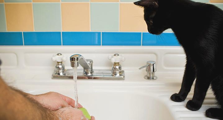 Gatto ti segue in bagno